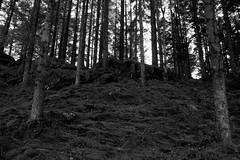 mossy woodland (Jacob Kazara) Tags: uk trees blackandwhite detail tree nature beautiful forest woodland landscape moss woods quiet peaceful mysterious