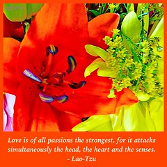249 (EDWW day_dae (esteemedhelga)) Tags: life flowers plants love beach me nature beauty loving garden blessings creativity hope living walks alone remember peace hand risk friendship time god you faith joy lakes parks belief celebration intelligence thoughts together gift quotes soul future dreams passion knowledge laughter worry strength care tomorrow happyholidays yesterday ponds teach sayings herb learn struggle fellowship gentle courage nightmares nurseries postive encouragment edww daydae esteemedhelga helpconfidence