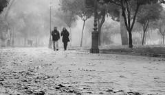 Un paseo sobre la niebla (fvalverdebujalance) Tags: tree hoja fog walk paseo cordoba niebla