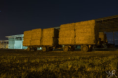 The bales are ready to feed to cows (Yovel Rodoy) Tags: night israel view cows feed agriculture bales