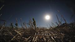 Trilla de trigo (Patricio J. Marc) Tags: argentina weed farm harvest fisheye rastrojo club16