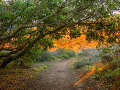Beauty in the Ordinary (rowjimmy76) Tags: california winter red tree green nature forest outdoors oak flora dece