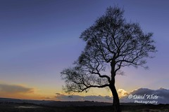 Lawrence's Tree (bretton98) Tags: winter sunset tree landscape derbyshire nopeople bluehour surpriseview afterglow hathersage canon7dmkii bretton98 davidwhitephotography lawrencestree