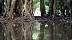 FRAMED (fabio lf petry) Tags: park urban reflection green nature water drops portoalegre redeno rainy
