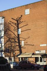 Sandwell Crescent, NW6 (Tetramesh) Tags: tetramesh london england britain greatbritain gb unitedkingdom uk bananatree 237239westendlane nw61xn westendlane nw6 sandwellcrescent westhampstead shadow tree banana explore flickrexplore