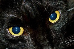 Don't stare (donjuanmon) Tags: black yellow closeup cat golden eyes cliches hcs donjuanmon