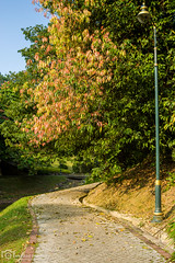 Pathway (mtux) Tags: road park autumn trees pentax pathway k3 kiron kiron28mmf2 justpentax