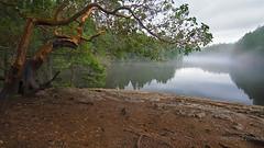 Arbutus in Fog (Heather_K_Jones) Tags: trees mist lake canada nature water fog forest landscape woods rainforest scenery rocks bc hiking britishcolumbia scenic victoria vancouverisland pacificnorthwest westcoast refelction thetislake arbutustree yyj thetislakeregionalpark