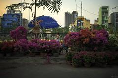 Florist (-clicking-) Tags: life spring asia cityscape streetphotography streetlife vietnam florist dailylife springtime streetvendor