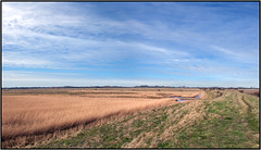 KOUDENHOEK (ESOX LUCIUS) Tags: holland reeds landscape taco polder birdsanctuary goereeoverflakkee koudenhoek