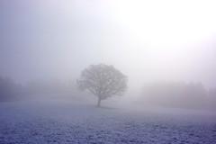 (Ramn Etis) Tags: winter tree landscape arbol paisaje invierno ramon etis ramonetis