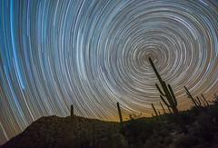 Pointing North (tristanotierney) Tags: longexposure arizona cactus night stars star sony astro nighttime astrophotography slowshutter saguaro nitetime startrails saguarocactus 14mm longexpo rokinon a7s