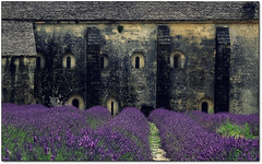 Vision. (rogilde - roberto la forgia) Tags: travel france walking purple path walk adventure occhi lavander provence sentiero gordes ricordi francia provenza lavanda abbaye abbazia paura percorso traccia valensole abbayedesnanque inquietudine finistre rogilde robertolaforgia