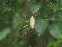 Spider Stalks His Web