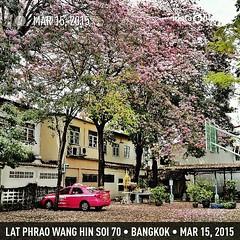 ตามกระแส #ชมพูพันทิพย์ รูปนี้สนามบาส ข้างบ้านครับ Photo made by Teerachai Travelpro Team http://travelprothai.com/ #instaplace #instaplaceapp #android #bangkok #thailand #day #th