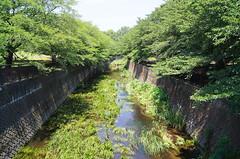 (setagayatoieba) Tags: park summer japan river tokyo     setagaya    kamisoshigaya     setagayatoieba