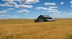 IMG_7694_it's the location. EXPLORE July 13, 2016 (lada/photo (on a road)) Tags: barn wheatfield fieldsofwheat washington stateofwashington farming ladaphoto cloudsskyandwheat