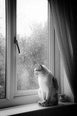 Waiting for the rain to stop (apricot's) Tags: odc lone cat mishmish