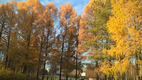 Рыбинск. Пёстрая осень