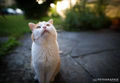 Bettelsack (fran.fotographix) Tags: betteln grn offenblende sigma imgarten fttern katze tiere bokeh