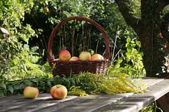 ckuchem-2054 (christine_kuchem) Tags: tisch korb deko dekoration apfelernte naturgarten herbstgarten