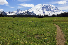 Mount Rainier (rbbrdckybk) Tags: mount rainier wild flowers grand park national pacific northwest yellow hiking path washington