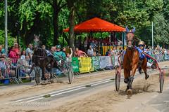 070fotograaf_20160728_036.jpg (070fotograaf, evenementen fotograaf) Tags: harnessracing racing draverij drafsport paardensport paardesport harness paardenmarkt holland netherlands nederland 070fotograaf kortebaandraverij voorschoten 2016 paarden draven kortebaan