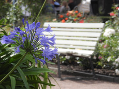 Sit down and enjoy the day (maj-lis photo) Tags: hbm bench flowers trdgrdsfreningen gteborg garden