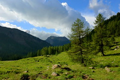 Wooded slopes (annalisabianchetti) Tags: woods trees mountains montagne alps italy clouds slopes paesaggio landscapes