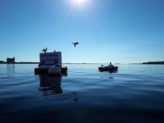 Boston Harbor Kayaking (TomBerrigan) Tags: boston harnbor kayaking kayak ocean water no wake seagulls