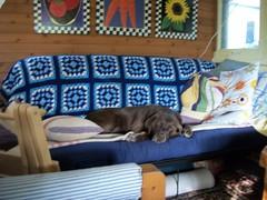 Oh, Oh. (geevee41) Tags: verandah dog pooch summer prairies