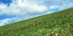 500798697 (mlowver) Tags: nopeople horizontal outdoors day sideview partof oneanimal nature animalthemes domesticanimals pets dog sky cloud horizonoverland meadow tranquilscene onthemove grass green concepts