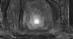Märchenwald / Fairytale Forest (eduard43) Tags: allee niedersachsen deutschland germany licht light avenueoftrees bäume trees schwarzweiss blackandwhite märchenwald fairytale forest fairytaleforest märchen bw grasberg moorgebiet