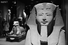 Egypt... (df_67) Tags: blackandwhite bw museum 35mm egypt egyptian fujifilm turin xpro1