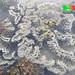 Flowery disk coral (Turbinaria peltata) bleaching 2014