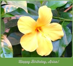 Happy Birthday, Arisa! (Trinimusic2008 - stay blessed) Tags: toronto ontario canada love nature dedication yellow thanks december foliage hibiscus card to gratitude iphone 2014 trinimusic2008 happybirthdayarisa judymeikle