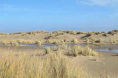 Pointe de la Coubre, La Palmyre (17) (Yvette G.) Tags: mer dune 17 charentemaritime poitoucharentes pointedelacoubre