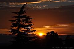 Posta de sol des de Montjuïc (Perikolo) Tags: barcelona sunset sun sol atardecer puesta montjuïc posta abeto capvespre avet arbreárbol