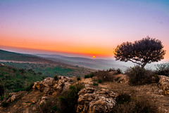 Orange sunset (Hamza Bendahmane) Tags: africa sunset sky orange mountain color tree nature beauty jaune landscape algeria aerialview nobody land algerie  yallow  endoftheday   colorimage