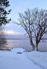 Loch Lomond At Luss (Michelle O'Connell Photography) Tags: trees winter snow tree nature landscape scotland scenery scottish dumbarton lochlomond luss a82 argyllbute michelleoconnellphotography