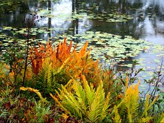 Nature's Splendor (hopefloats17) Tags: flowers winter summer signs fall love ice beach church nature water birds animals angel clouds landscape photography hope frozen spring amazing woods scenery rocks waves peace wind contemporary wildlife sunsets grace spirituality inspirational seabirds wellness empowerment uplifting