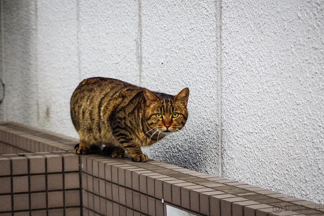 Today's Cat@2015-02-05