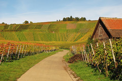 House in Autumn Vineyard (Habub3) Tags: autumn house canon vineyard herbst haus powershot weinberg g12 2015 habub3