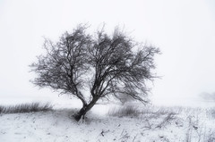 Leaning in (Alison T30) Tags: winter snow lonetree