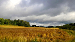 Finnish Landscape in  Summer 2014 (Raf...) Tags: summer landscape meadow summertime thegalaxy