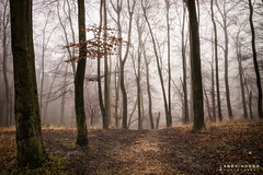 At the top of the slope (Andy Hough Photography) Tags: wood morning trees england mist woodland unitedkingdom sony steps beech wallingford southoxfordshire a99 sonyalpha andyhough slta99v littlewittenhamwood andyhoughphotography