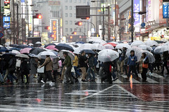 Ikebukuro Rainy Sunday (DigiPub) Tags: road street people wet rain weather japan horizontal umbrella outdoors photography tokyo sunday crowd ikebukuro editorial  onsale japaneseculture gettyimages zebracrossing tokyojapan  2015   capitalcities colorimage   542020611 m20150302