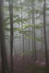 misterioso bosco (mat56.) Tags: park wood trees parco misty fog alberi landscape landscapes atmosphere lucca antonio nebbia alpi paesaggi atmosfera paesaggio garfagnana apuane bosco mat56 ortodidonna romei minucciano