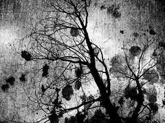 (Rossdxvx) Tags: trees blackandwhite abstract tree art texture silhouette skyline contrast dark outdoors experimental noir shadows gloomy grim outdoor decay surrealism lofi surreal overlay gritty eerie creepy textures overexposed grime dilapidation decaying dilapidated textured 2016 grimtrees