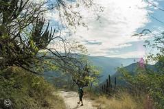 DSC03170 (Braulio Gmez) Tags: barrancadehuentitn biodiversidad caminoamascuala canyon canyonhuentitan faunayflora floresyplantas guadalajara jalisco mountainrange naturaleza sierra senderismo paisaje barrancadehuentitn barranca huentitn ixtlahuacandelro mxico guardianesdelabarranca